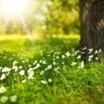 環境の変化の中メンタルを保つために…心の疲れに効く7つのこと。