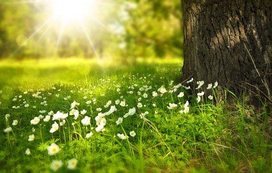 花と日光と木の画像