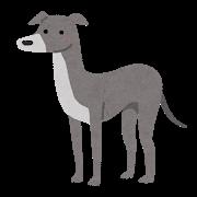 グレーの犬のイラスト