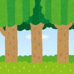 木に抱きつく。変だと思われない方法を7つ提案。心にパワーを!