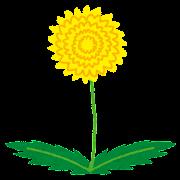 一輪のたんぽぽの花のイラスト